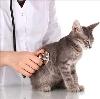 Ветеринарные клиники в Юкаменском